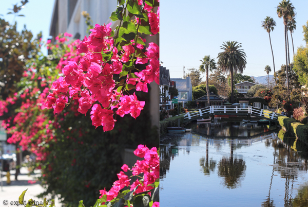 Bougainvillea and Venice palm trees, LA by Expat Edna