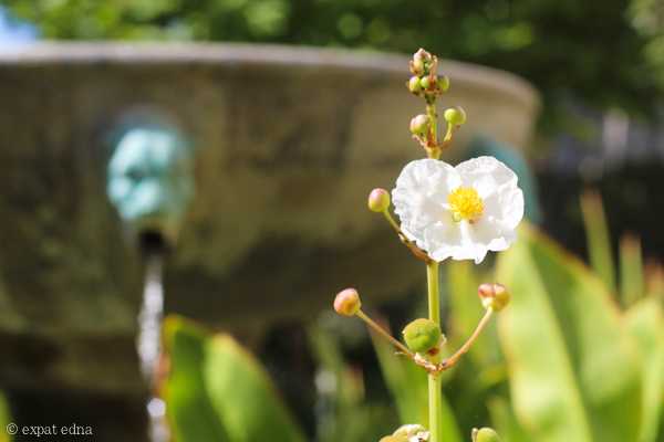 Flower, Getty Villa, LA by Expat Edna