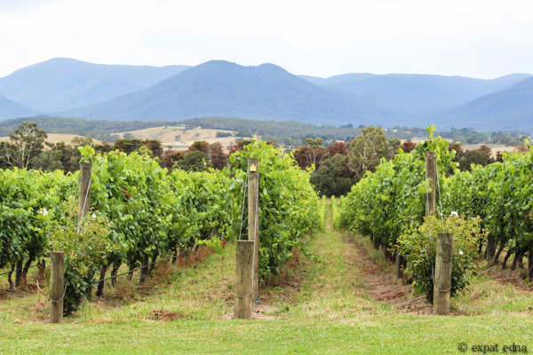 Chandon Vineyards - Yarra Valley Wine Tour Melbourne by Expat Edna