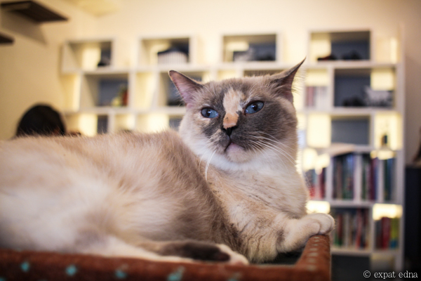Cat Cafe, Tokyo by Expat Edna