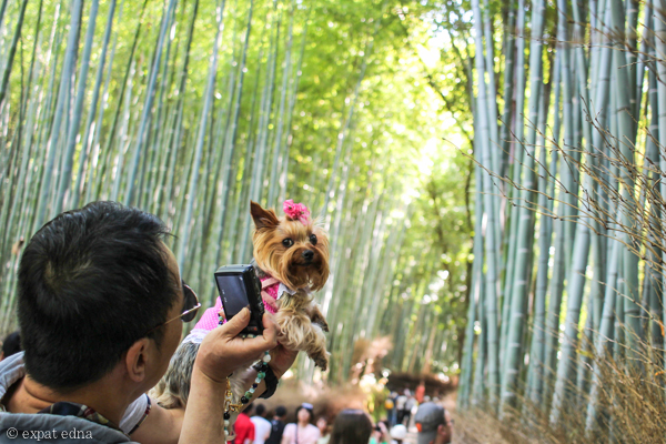 Dog in Arashiyama Bamboo Forest by Expat Edna