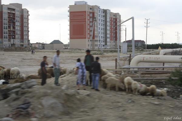 http://expatedna.com/wp-content/uploads/2012/12/sheep.jpg